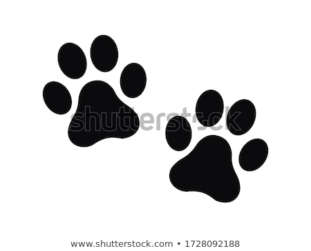 dog footprints stock photo © leeser