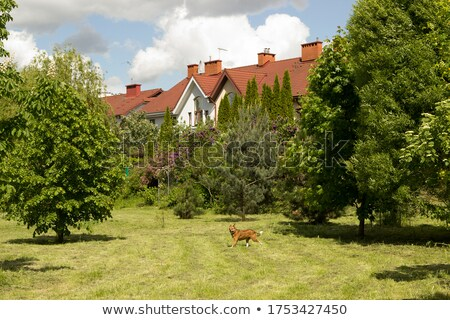 little private house in green bushes Stock photo © LoopAll