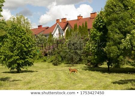 kicsi · üvegház · magányos · domb · ház · otthon - stock fotó © loopall