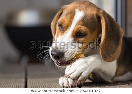 Kutya csemegék színes fehér étel zöld Stock fotó © mybaitshop