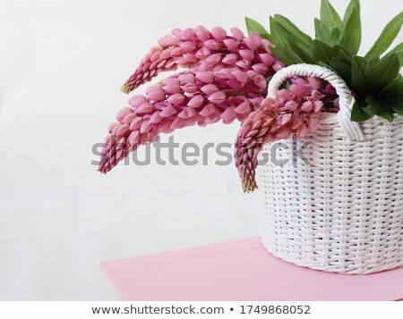 синий белый цветок лет области Сток-фото © inxti
