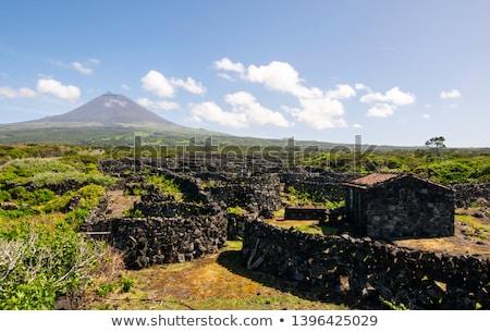 Stockfoto: Koeien · eiland · hemel · boom · natuur