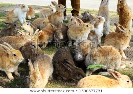 ウサギ · 島 · 水 · 森林 · 海 - ストックフォト © lillo