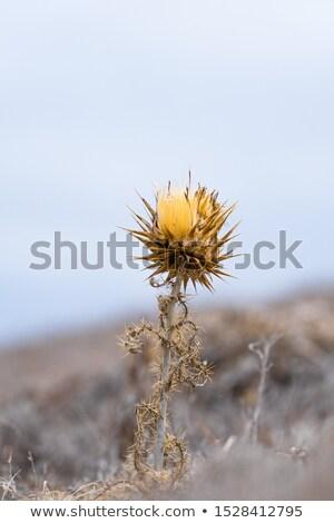 campo · distanza · fiore · nubi · primavera · estate - foto d'archivio © inaquim