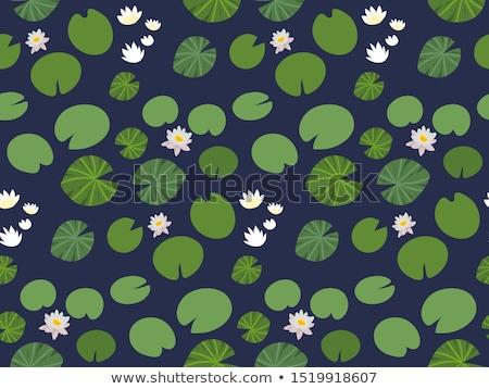 fehér · rügy · tavacska · virág · levél · zöld - stock fotó © arenacreative