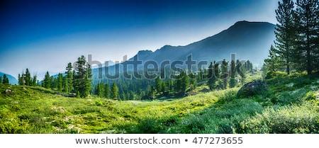 Montanha alcance campo céu árvore natureza Foto stock © zzve