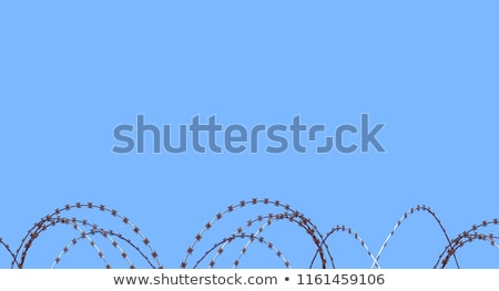 Coiled razor wire on top of a fence Stock photo © juniart