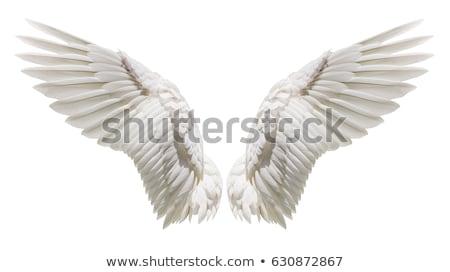 Pretty angel Stock photo © Novic