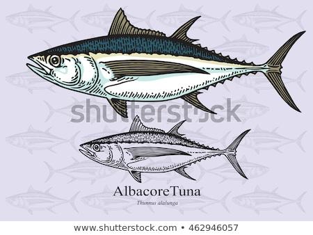 Albacore tuna fish Stock photo © marimorena