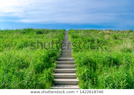 stairs in sky with green grass road and clouds stock photo © cherezoff