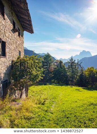 Falu csőr zöld mező kicsi olasz Stock fotó © Antonio-S