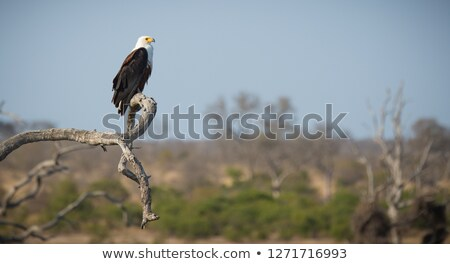 Wildlife at the waterhole Stock photo © dirkr