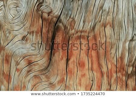 Groot hout knoop sparren plank Stockfoto © taviphoto