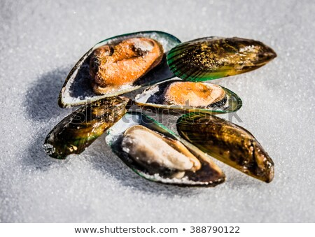 Green mussel with ice Stock photo © tangducminh
