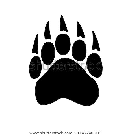Bear Paws Stock photo © phil_albertelli