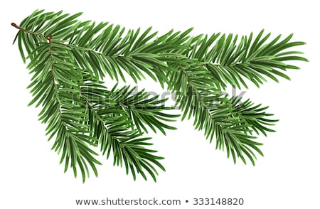 Verde exuberante ataviar rama abeto Foto stock © orensila