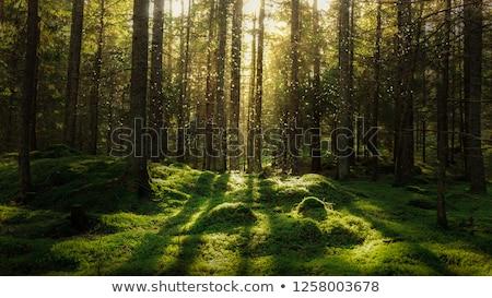 Yeşil yosun orman doğal soyutlama Stok fotoğraf © Kotenko