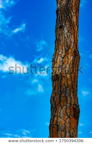 grunge · corteccia · abstract · crack · scratch · legno - foto d'archivio © lunamarina