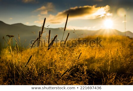 haystacks in a mountain meadow stock photo © kotenko