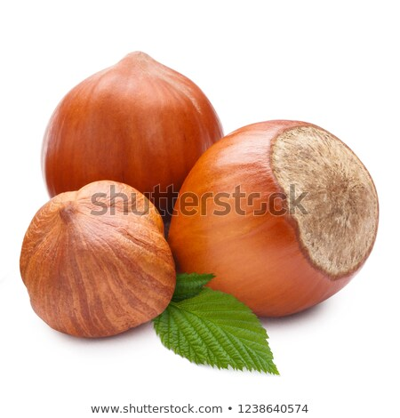 three clear hazelnuts stock photo © mikko