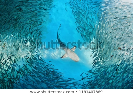 Haaien klein vis aquarium zwemmen diep Stockfoto © lightkeeper