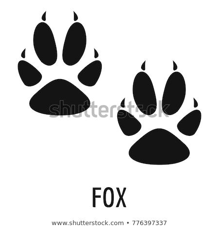Lábnyom róka illusztráció fa erdő felirat Stock fotó © adrenalina