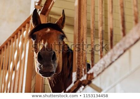 Cheval permanent extérieur écurie oeil heureux Photo stock © meinzahn