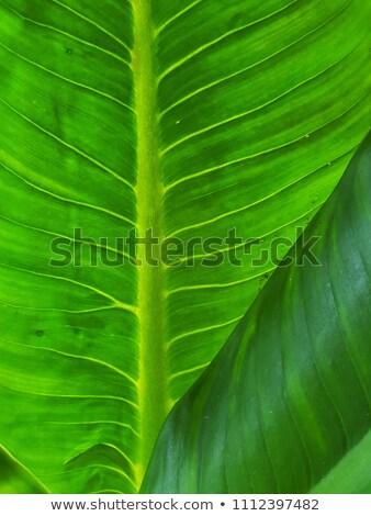 Aderen kleurrijk vector patroon blad Stockfoto © Tawng