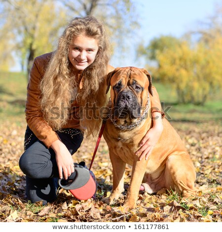 teen girl walking with the dog bullmastiff stock photo © oleksandro