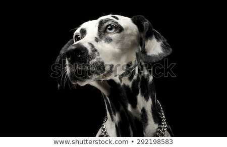 ストックフォト: 黒 · 毛皮 · 犬 · 暗い · 写真 · スタジオ