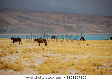 paisagem · tibete · montanhas · água · natureza · fundo - foto stock © tomistajduhar