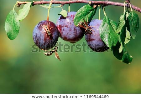 sevimli · bitki · canavarlar · haşarat · gıda · arka · plan - stok fotoğraf © bluering