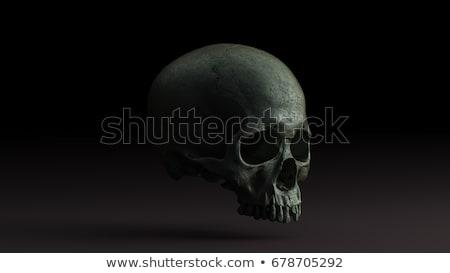 Foto d'archivio: Umani · cranio · dettagliato · anatomia · view · isolato