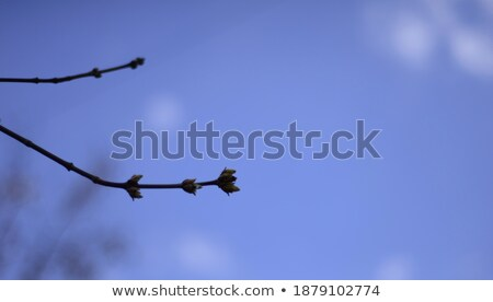 Heldere Blauw abstract hartslag lijn Stockfoto © Tefi