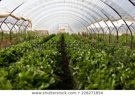 campo · agricola · materiale · serra · bugie · business - foto d'archivio © digifoodstock
