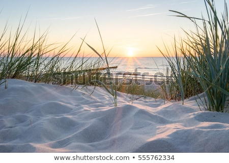 砂丘 ビーチ 草 曇った 空 雲 ストックフォト © iofoto