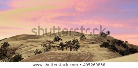 mount hamilton foothills and santa clara valley sunset stock photo © yhelfman