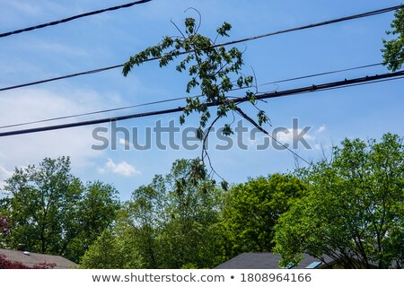 storm clouds over trees and telephone lines stock photo © is2