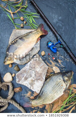 Merkezi balık ölçek mikroskobik atış Stok fotoğraf © Mps197