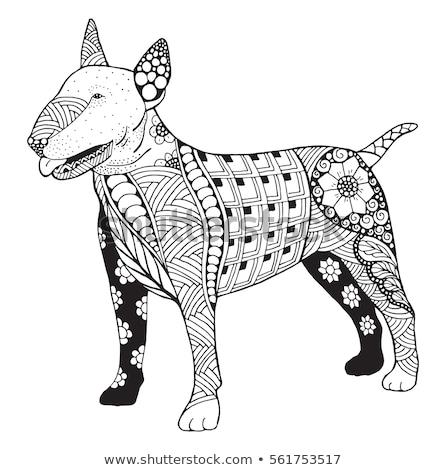 toro · terrier · ritratto · cane · faccia · design - foto d'archivio © izakowski