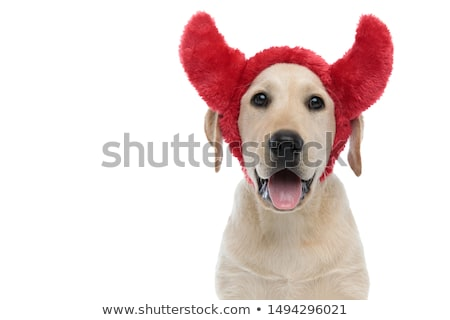Cinque adorabile cuccioli indossare rosso diavolo Foto d'archivio © feedough