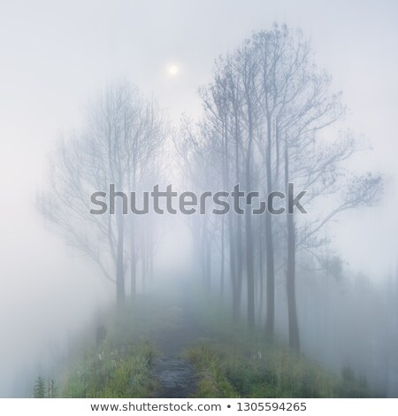Foggy mystery moonlight in long way with trees  Stock photo © Taiga