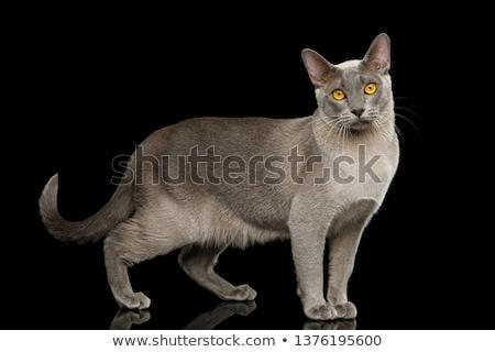 вид сбоку любопытный кошки Постоянный белый Сток-фото © feedough