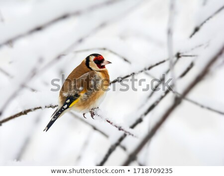 Europeu sessão neve coberto Foto stock © manfredxy