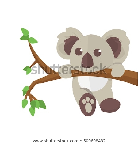 koala bear cuddling on a branch stock photo © backyardproductions