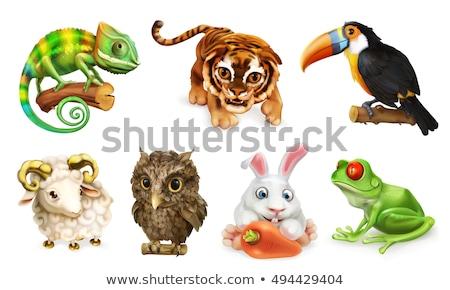 Funny Chameleon charakter cartoon ilustracja Zdjęcia stock © izakowski