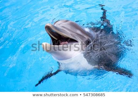 Dolfijn illustratie voedsel glimlach gelukkig natuur Stockfoto © colematt