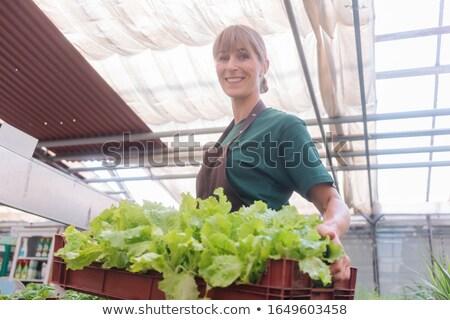 Market gardener growing herbs in her hothouse Stock photo © Kzenon