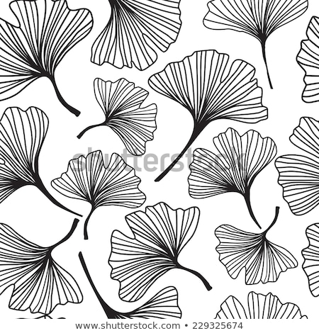 Monochrome leaves of ginko biloba Stock photo © blackmoon979