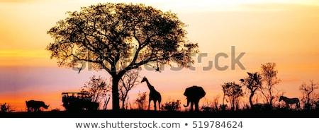 Wilde dieren nacht afrikaanse savanne silhouetten savanne Stockfoto © liolle